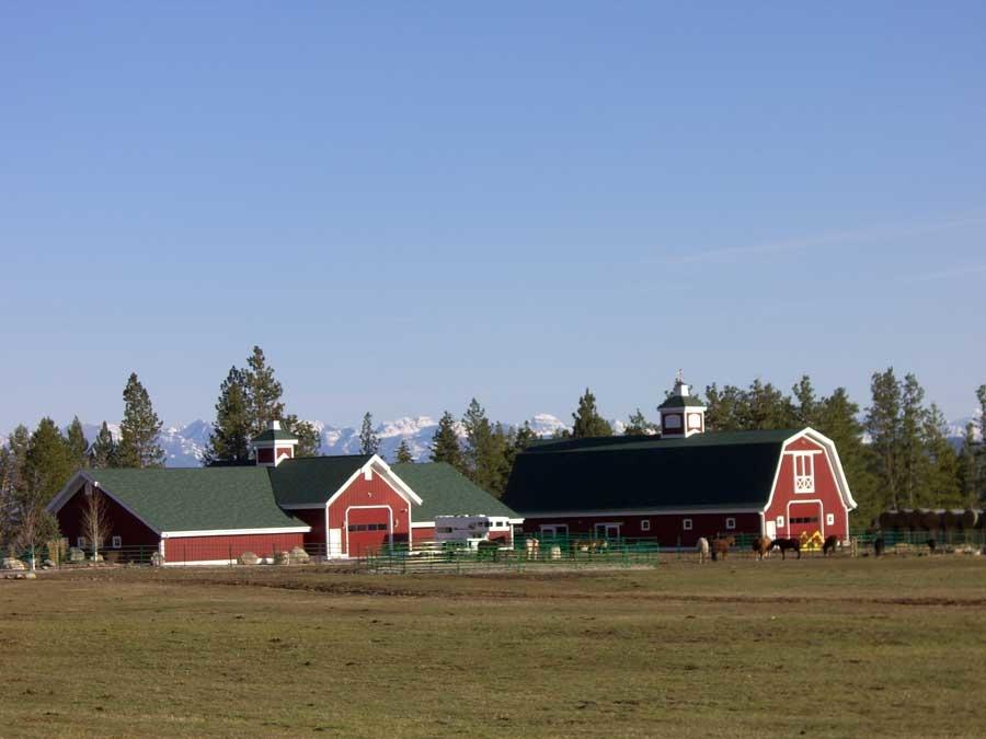 montana dream ranch horses